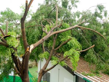 Fallen Tree Damage Restoration by Power Flood Removal Structure Dry